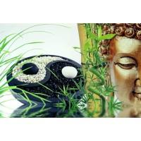Poster Yin Yang Bouddha
